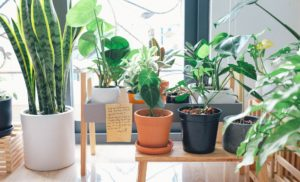 apartment gardening guide for beginners