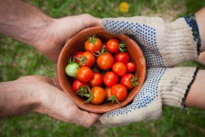 easy things to grow in a garden